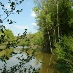 Etang des Cresses, à proximité de la réserve naturelle Marie Mouchon.